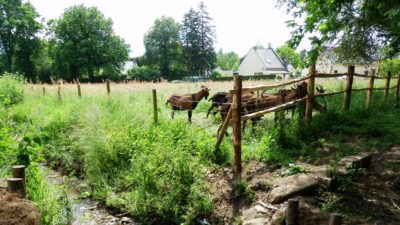 Parthenay de Bretagne boucs coulée verte