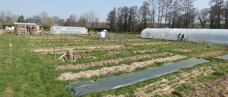 Le champ de patates permaculture Langouet