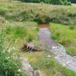 Concoret cours d'eau étang